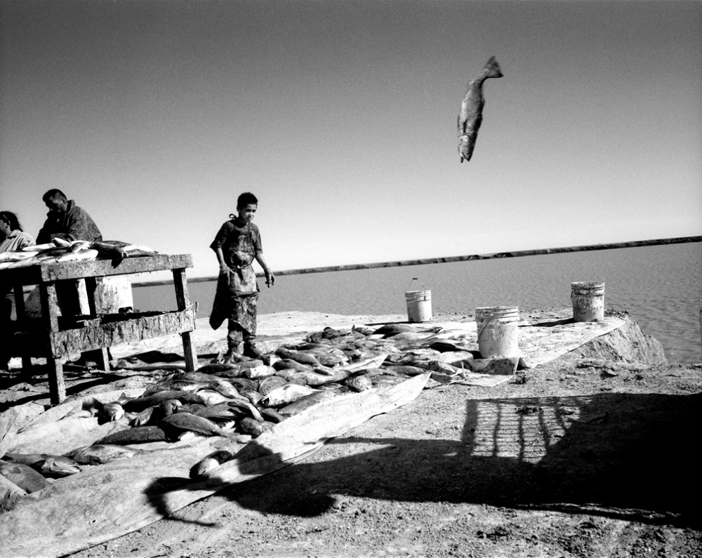 Art and Documentary Photography - Loading 20020324_FlyingFish.jpg